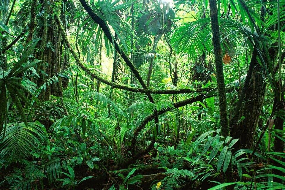 La jungle des sites de rencontres - quel genre de créature êtes-vous